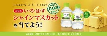 未発売のフレーバー(い・ろ・は・す シャインマスカット)